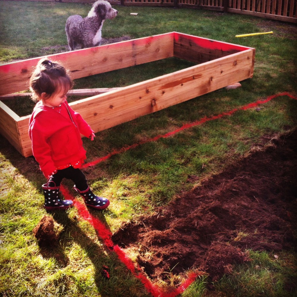 Even though our dirt was going to be more than a foot deep inside the garden box, we chose to remove the sod to not only help anchor the box into the ground, but also make it so no grass would even think about growing in our 50/50 soil.