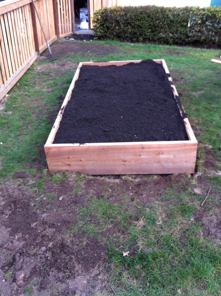 We bought a yard of 50/50 topsoil from McClain's Soil Supply in Tacoma. It was not only cheap, but so far the veggies have grown very well in it.