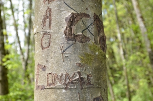 Not sure Kobayashi Park is quite lover's lane, but there were plenty of people professing undying love for each other by carving into the poplar trees. As an aside, I'd encourage folks not to do this.
