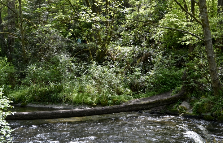 There are paths on the other side of Chambers Creek, and the only way we could see to get to them is by crossing this log. Be careful, as the water flows fast and is somewhat deep underneath it.