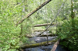 Going upstream next to Leach Creek shows a bit more of a wild environment than the clear path next to Chambers Creek.