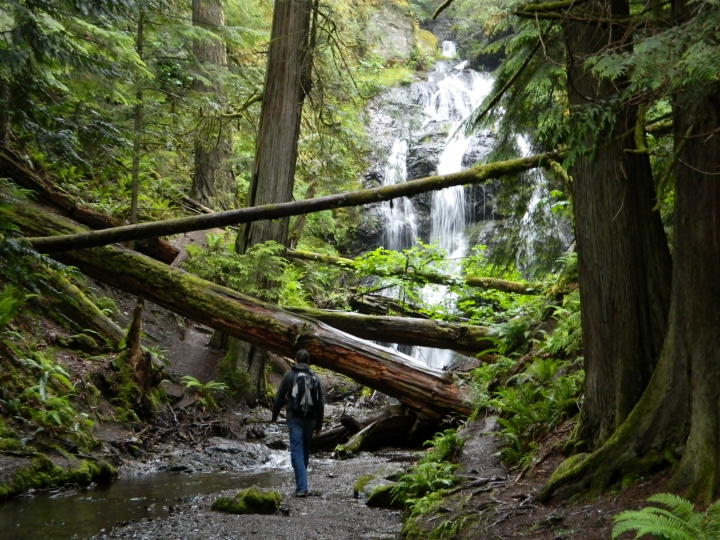 I love this photo. It is so wild. So Western Washington. The downed trees, the waterfall in the background, the creek in the foreground, and a solitary human dwarfed by the nature.