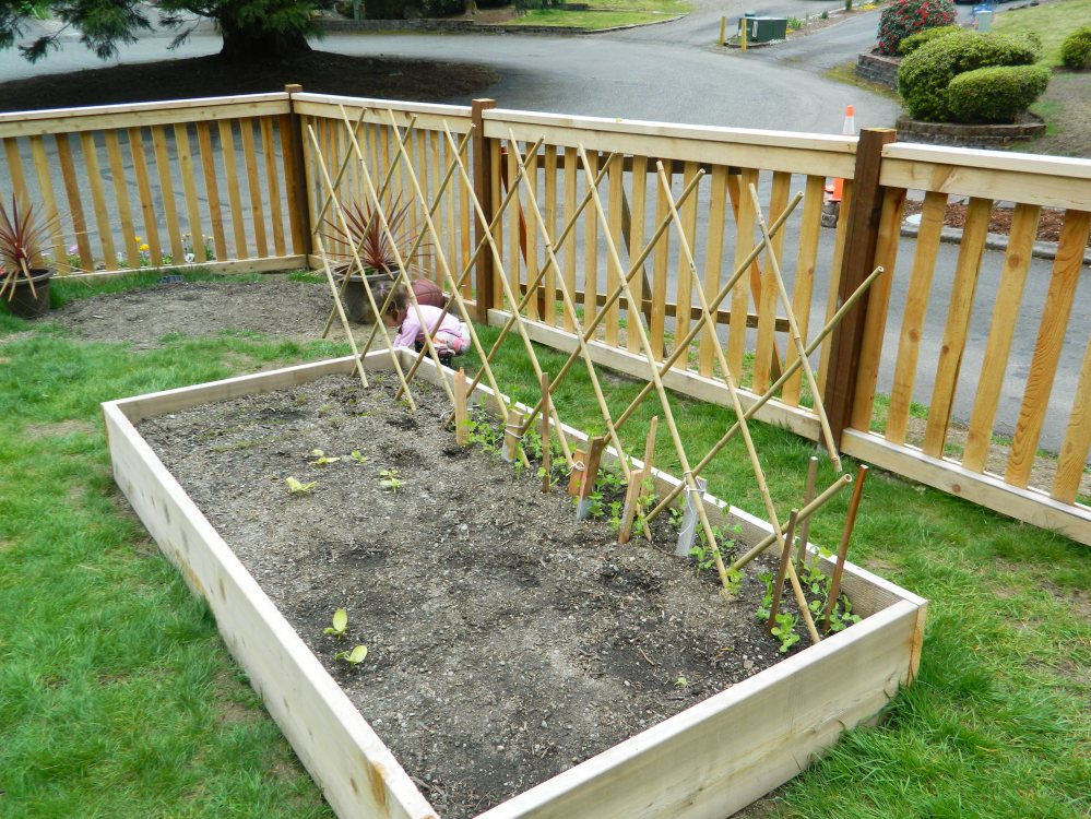 The snap peas are starting to grow, and we also bought a new bamboo trellis.