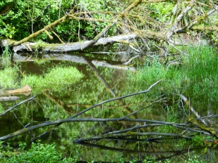 There is more than just the flowing creeks in Kobayashi Park. There are also wetlands filled with creatures and fallen creatures.