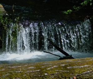 A beautiful little waterfall on Leach Creek, which joins Chambers Creek in Kobayashi Park.