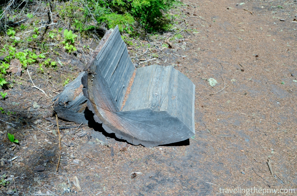 Hilarious bench that someone cut out of a fallen down tree. Need a rest? Why not sit here.
