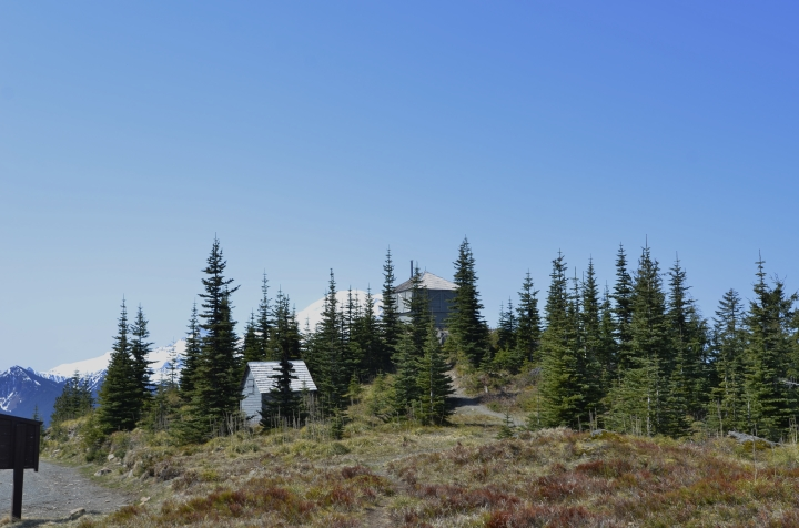 The summit area has a parking lot, vault toilet, outbuilding and the historic fire lookout (building in middle). While there are 360-degree views from near the lookout, the best views of Mt. Rainier are on the trail leading up to the summit, where there are less trees.