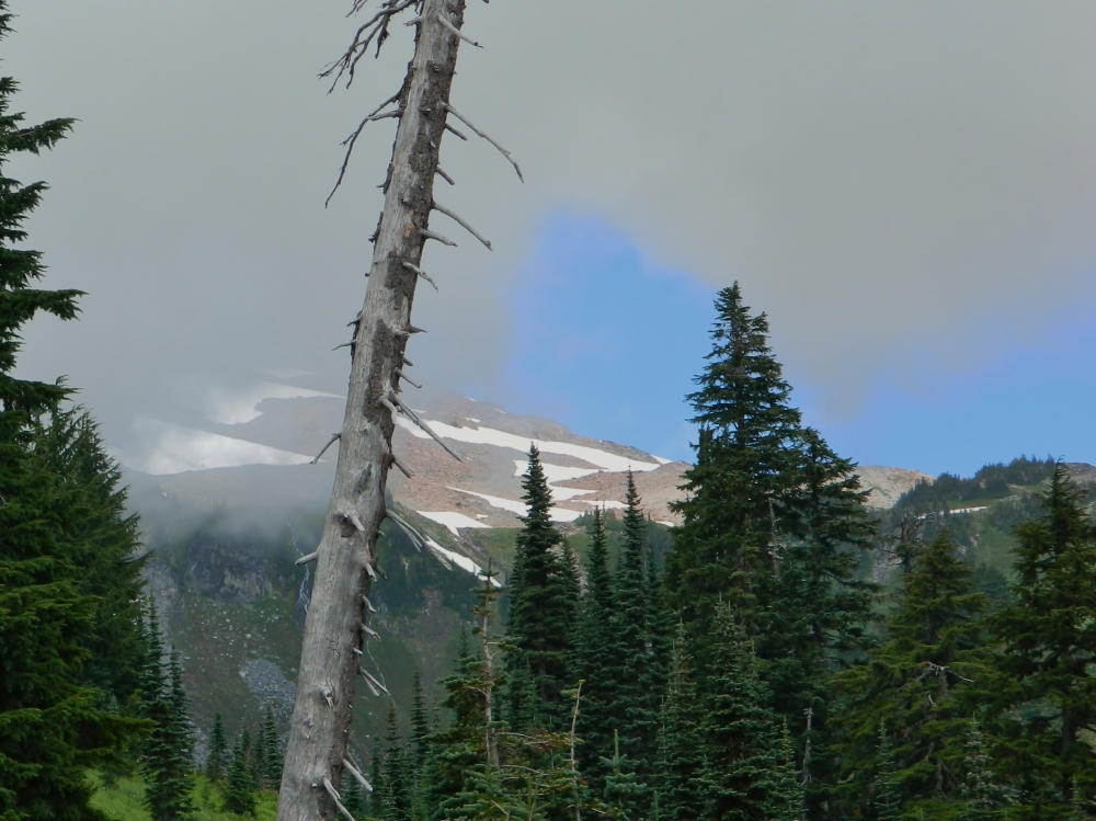 In the summer of 2014, we drove up to the Paradise area of Mount Rainier National Park. This was the only time we saw the mountain that day, and it wasn't very much of it. (Photo by Craig Craker)