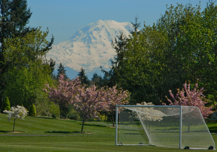 Mt. Rainier looms above the soccer fields and the cherry blossoms at Chambers Bay Park in University Place. (Photo by Craig Craker)