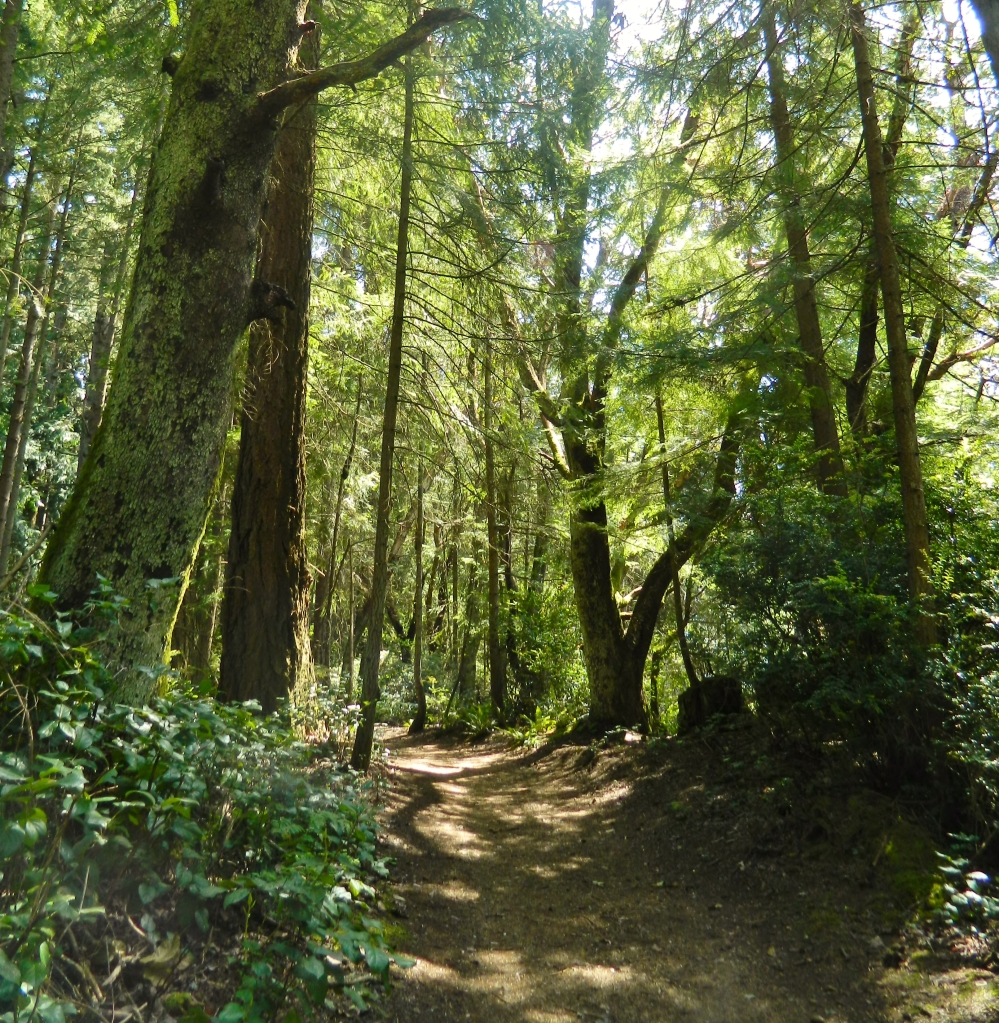 The stretch of the Outer Loop Trail we hiked recently was mainly a wondrous stretch through forests made up of a variety of trees.