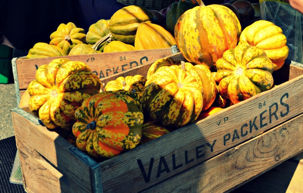 FarmersMarketEDITSQUASH
