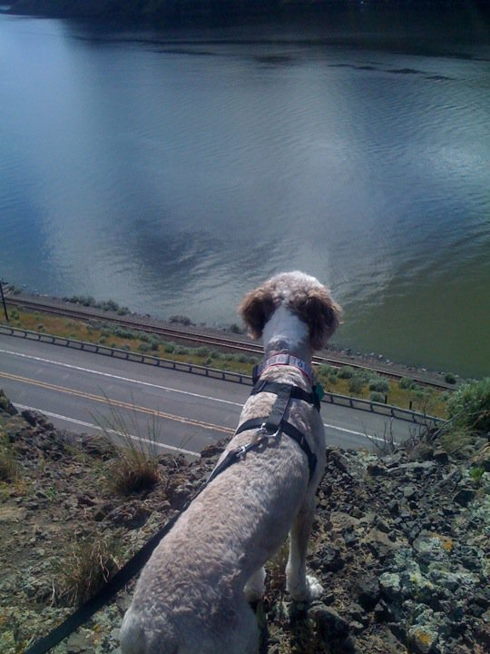 Ms. Molly enjoying the view and wondering how hard it would be to leap down the mountain to get at the birds below.