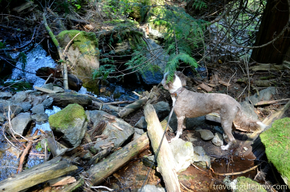 A flat spot about halfway up the hillside to the base of Skookum Falls. Molly enjoyed cooling off in Skookum Creek.