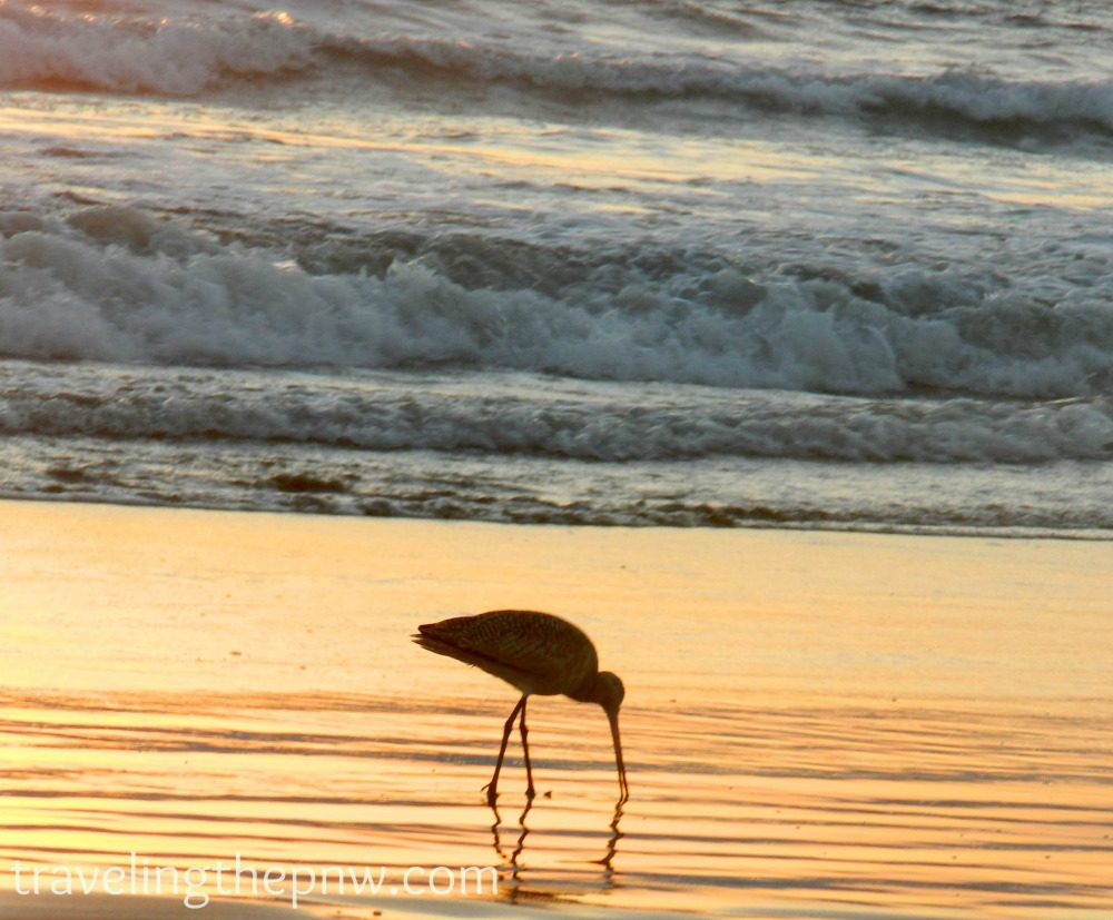 This is one of my favorite photos I've ever taken. I only include it in my sunsets post because I don't think all sunset shots have to include the actual sun. I love the color in the water, and the reflection of the bird in this shot at Venice Beach.