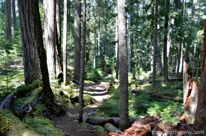 The Skookum Flats trail is well defined and winds its way through amazing old growth forest, as well as spots next to the White River. It features very little elevation gain, and is a good family hike.
