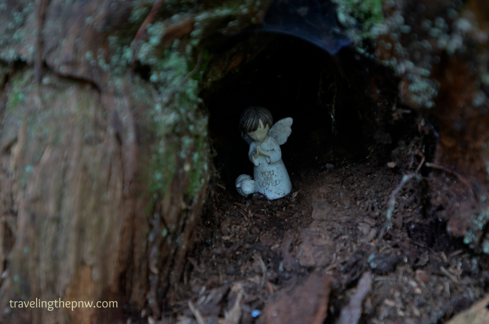 Someone left an angel statue inside of the tree, perhaps as a blessing on all who passed by it.