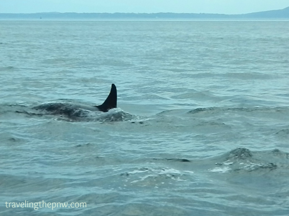 Part of Craig's fear of the ocean is the possibility of sea creatures touching him. Can you imagine an Orca swimming nearby? That would be awesome and terrifying!