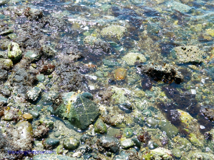 Tide pools don't have to be full of visible life to be beautiful. The color of the rocks alone can make for a fun day.