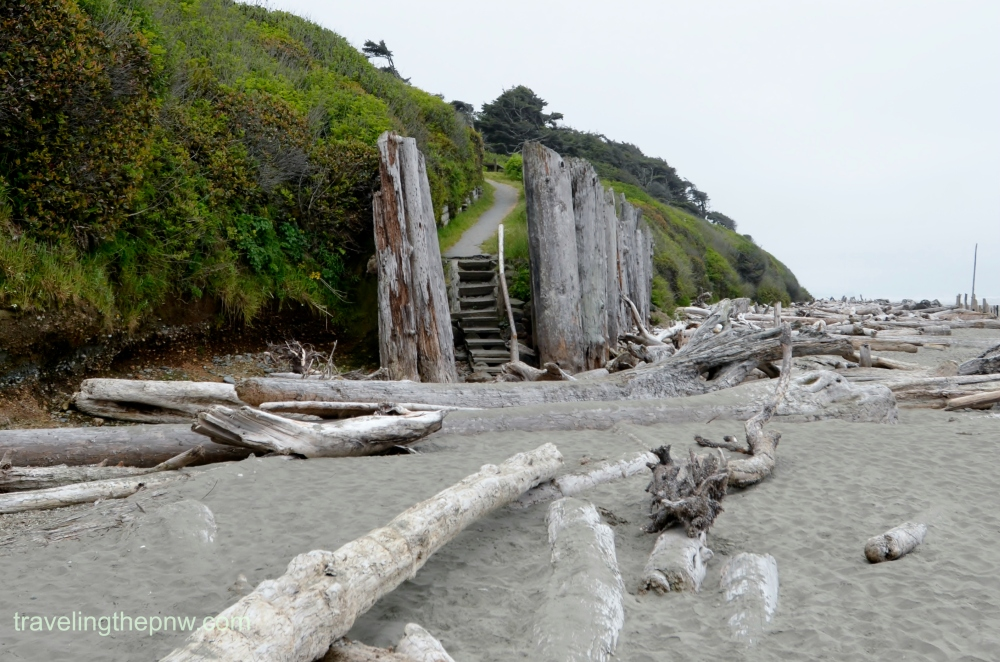 The trail from the campground down to the beach. The driftwood was pretty intense.