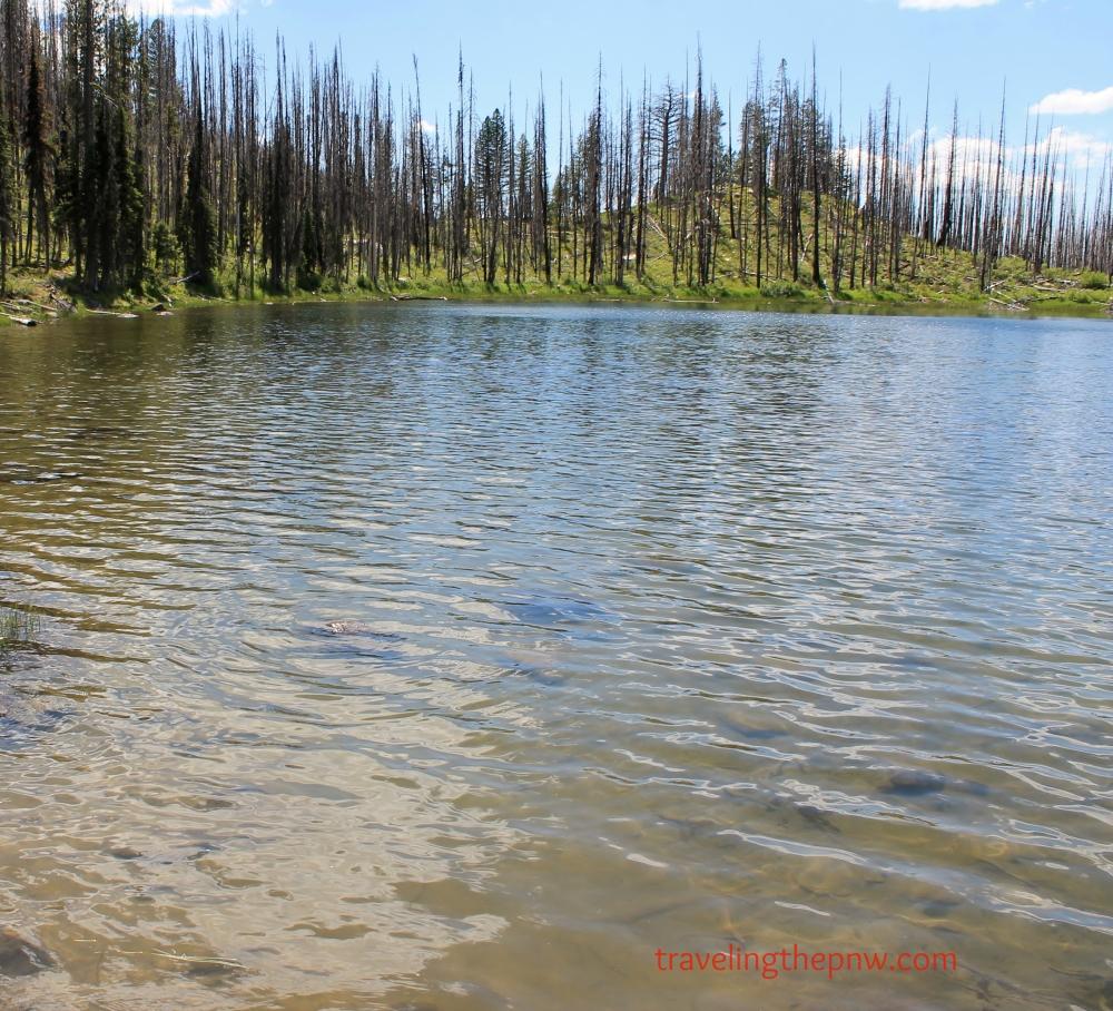 Despite its beach-less shores and muddy bottom, Summit Lake provides a wonderful place to wade and fish.