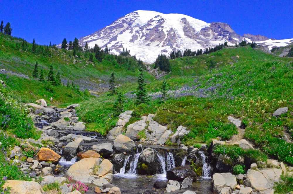 Edith Creek runs through a meadow with Mount Rainier looming in the background.