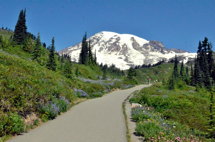 Mount Rainier looms above hikers making their way up the Skyline Trail.