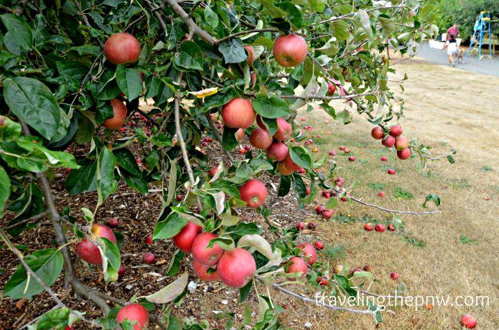 applepark2
