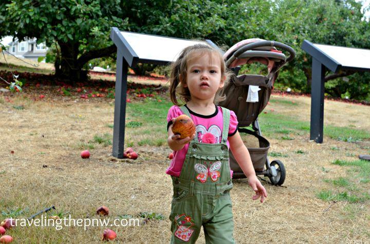 applepark5