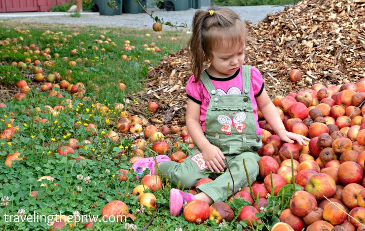applepark6