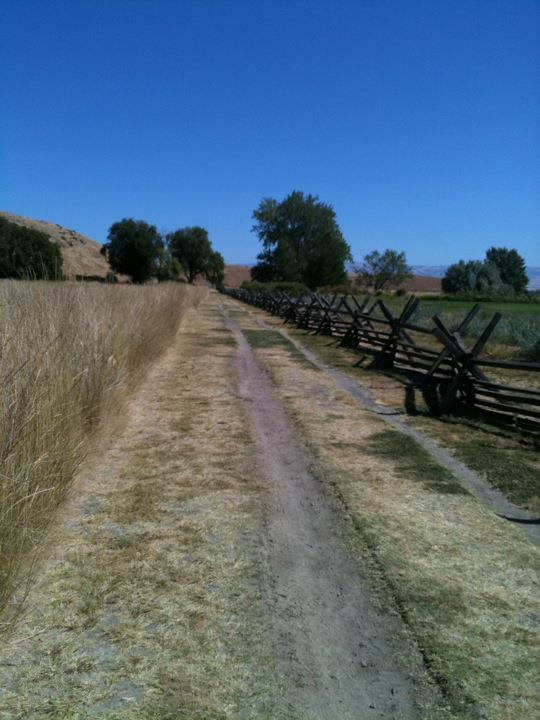 The Oregon Trail. I did not die of dysentery.