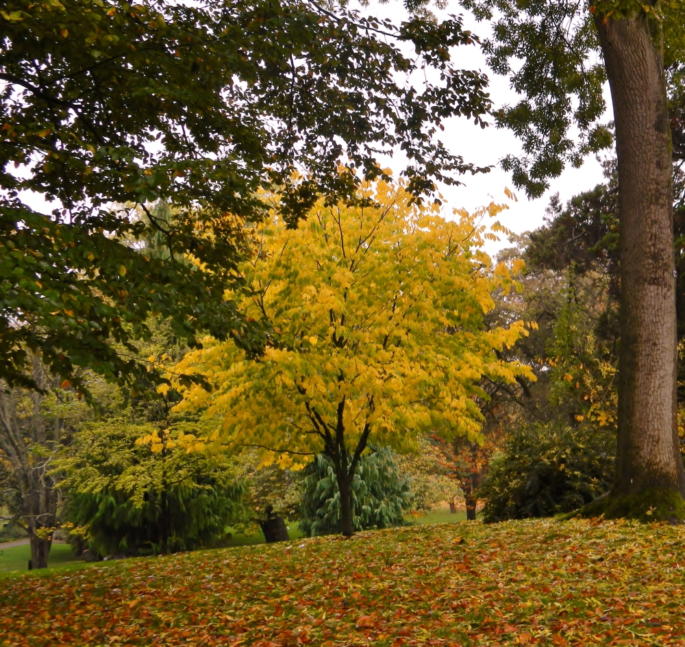 There is lots of color in the trees at Wright Park.