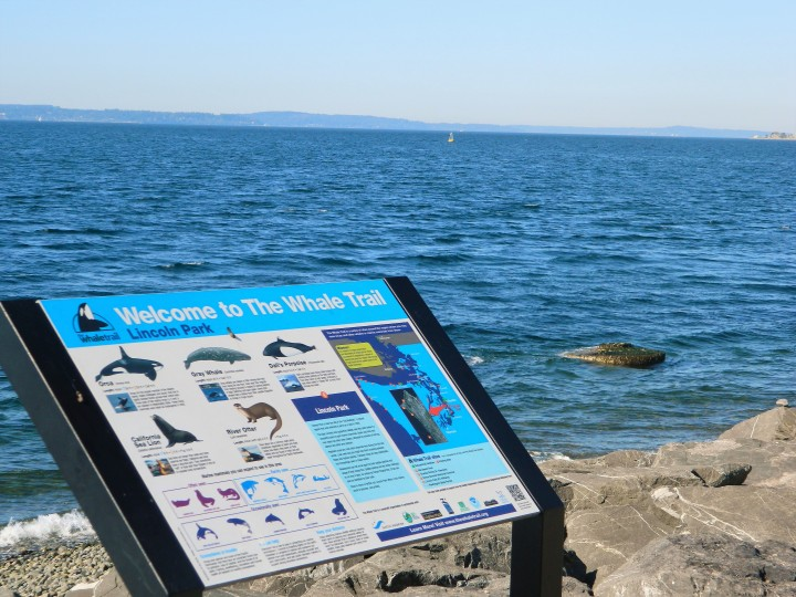 According to this sign, you can see myriad whales from this beach.