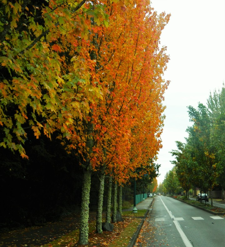 I love this street no matter the time of year thanks to all the trees, but when the leaves are orange might be my favorite.