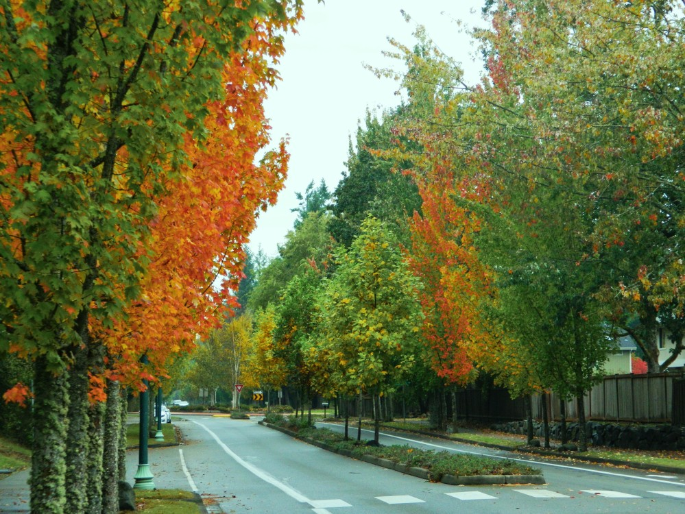 Grandview Boulevard near Chambers Bay is awash in color this time of year.