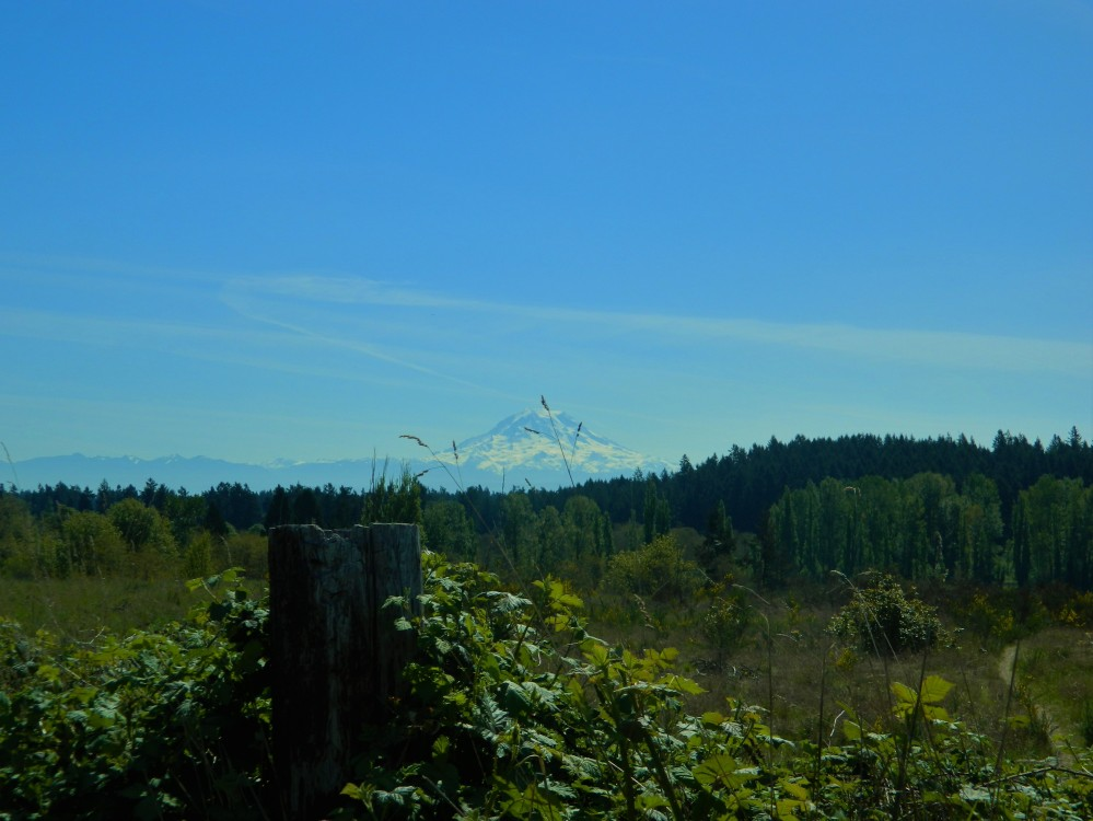 Parts of the park offer big views of Mt. Rainier, the Olympic Mountains and the Puget Sound.