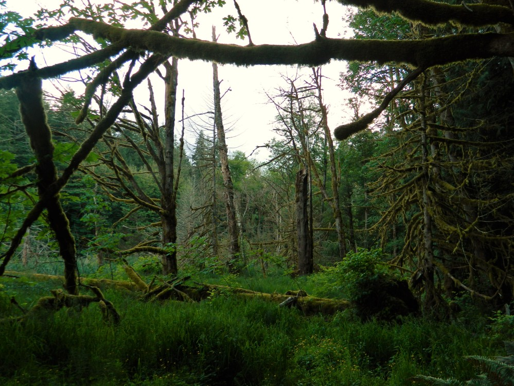 The marsh area with Boyce Creek running through it features a variety of trees and lots of moss.