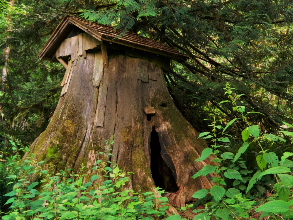 The Stump House, thought to be built in the 1800s originally to house Dirty Thompson a criminal on the run from the law.