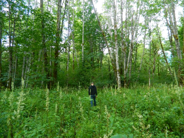 Thomas pretending he isn't lost in the woods near our campground. Just a man in his element.