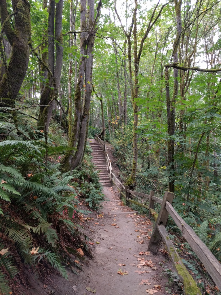 The trail which winds down the hillside to reach Puget Creek is filled with staircases to help hikers with the steep path.