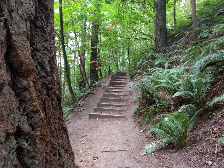Some of the stairs that make up the Puget Creek trail.