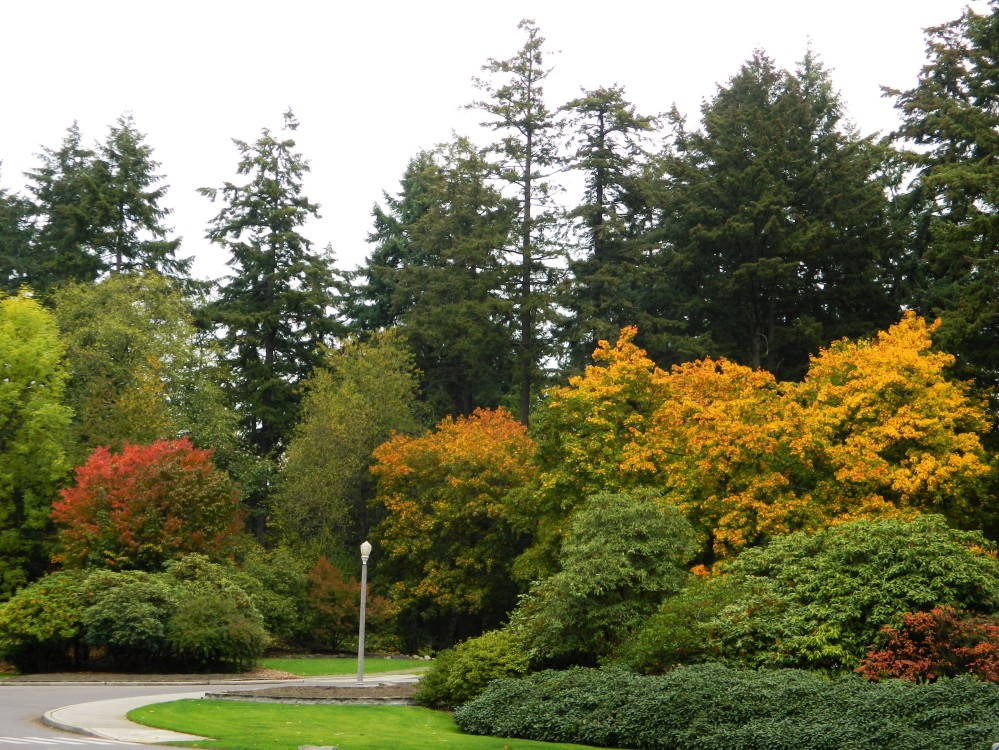 Wapato Park has lots of fall colors.